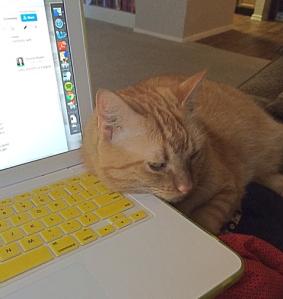 My usual beta reader, Aslan.